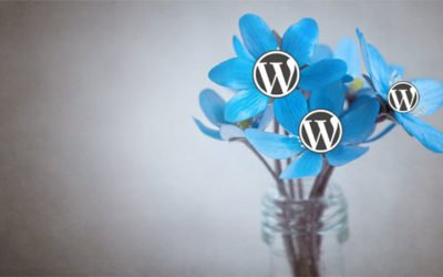 Le printemps est là ! faites éclore votre site internet